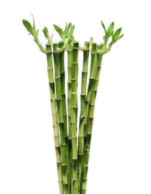 Бамбук прямой 35 см